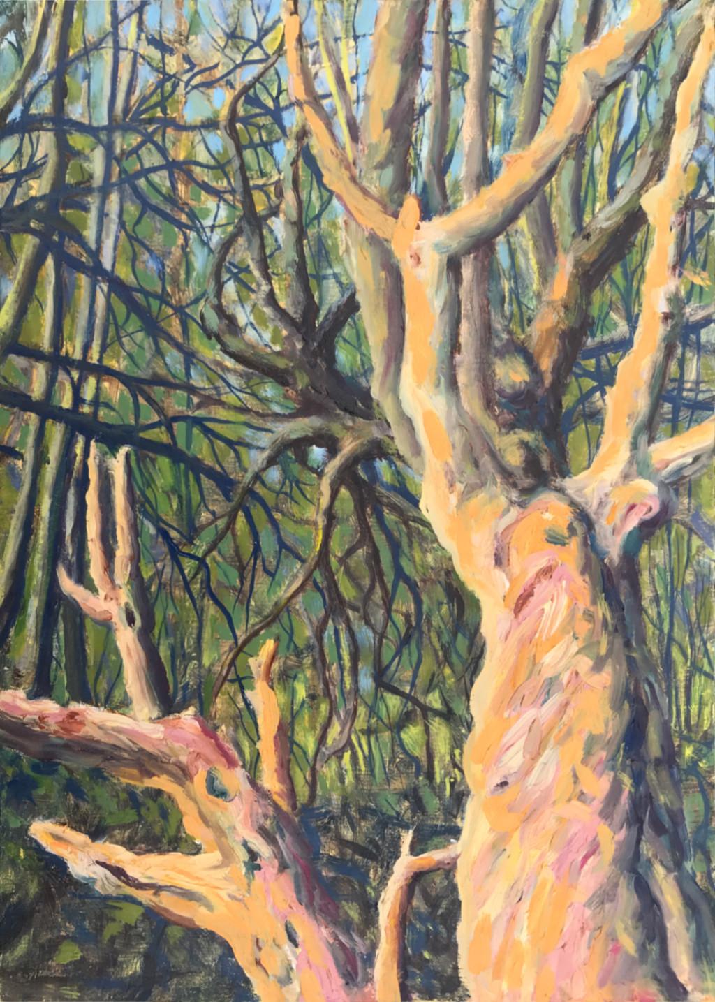 Old tree study